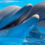 Советник Dolphin — прибыльный форекс советник